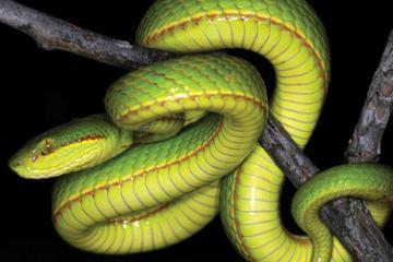 Phát hiện loài rắn mới trùng tên pháp sư nổi tiếng trong Harry Potter