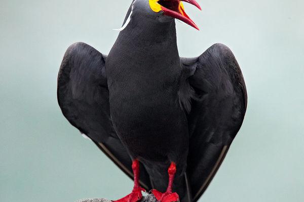 Lạ lùng những loài chim sặc sỡ ở đất Nam Mỹ