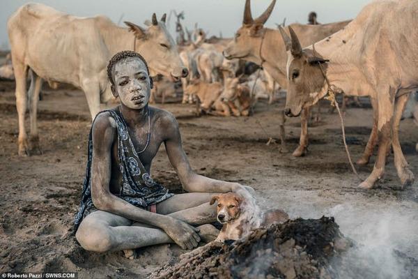 Bộ tộc dùng nước tiểu và phân bò nhưng quyết không ăn thịt chúng