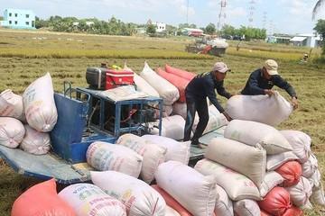 Từ 0h ngày 26/4, có thêm 38.000 tấn gạo được xuất khẩu