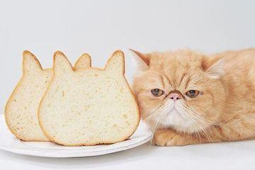 Phát sốt với những ổ bánh mỳ mặt mèo dễ thương nhất hệ mặt trời