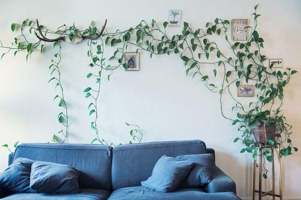 """""""Choáng ngợp"""" phát hiện phòng khách biến thành vườn cây sau 7 tháng đi vắng"""