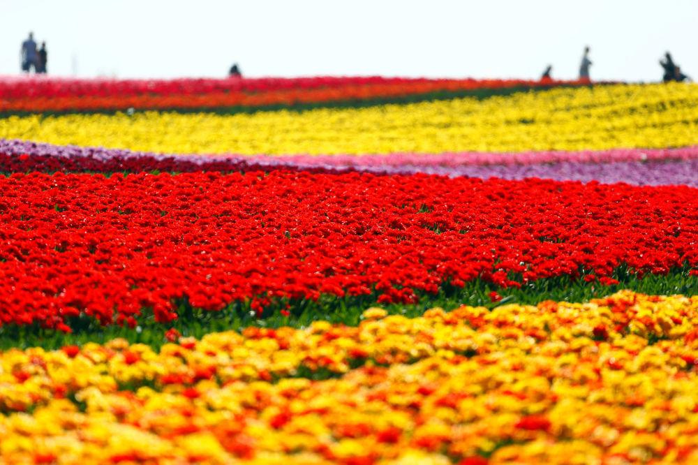 Một thế giới rực rỡ sắc hoa bất chấp đại dịch Covid-19