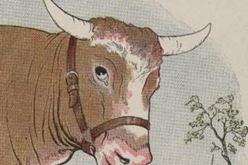 Truyện ngụ ngôn tối nay: Con muỗi và con bò đực