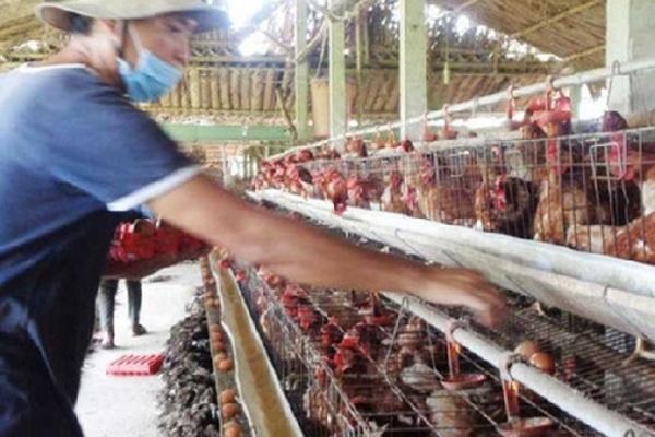Bắc Ninh: 8 trang trại chăn nuôi gia cầm được công nhận cơ sở an toàn dịch bệnh