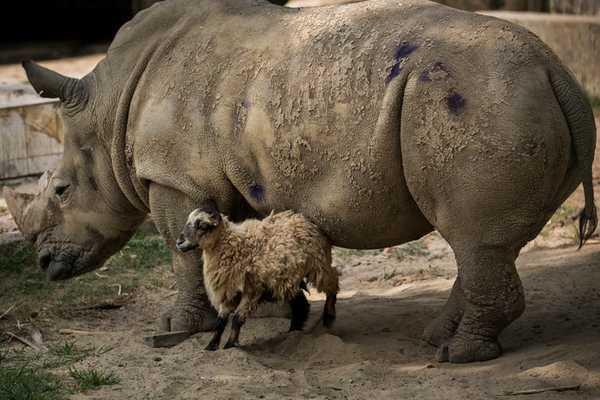 Tình bạn cảm động của các loài vật khác nhau trong tự nhiên