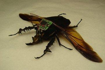 """Các loại """"vũ khí côn trùng"""" khủng khiếp nhất trong mọi cuộc chiến"""
