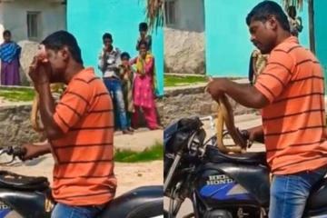 Người đàn ông cắn con rắn thành từng mảnh vì bị chặn đường