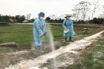 Hà Nội: Khống chế thành công ổ dịch cúm gia cầm A/H5N6 ở Chương Mỹ