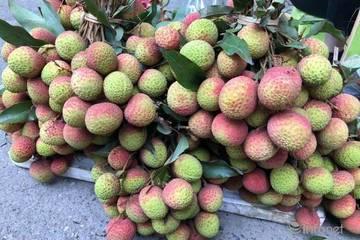 Hà Nội xuất hiện vải đầu mùa giá 70.000 đồng/kg