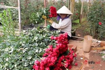 """Sau thời gian ế ẩm, giá hoa Đà Lạt đang """"ấm"""" dần"""