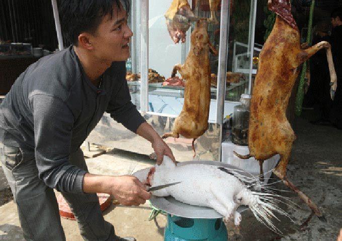 70% các bệnh truyền nhiễm có nguồn gốc từ động vật hoang dã: Cách nào ngăn?