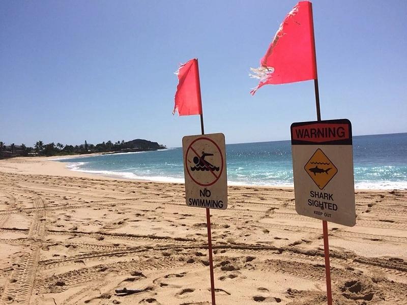 Trốn cách ly đi lướt sóng, thanh niên 26 tuổi bị cá mập cắn chết