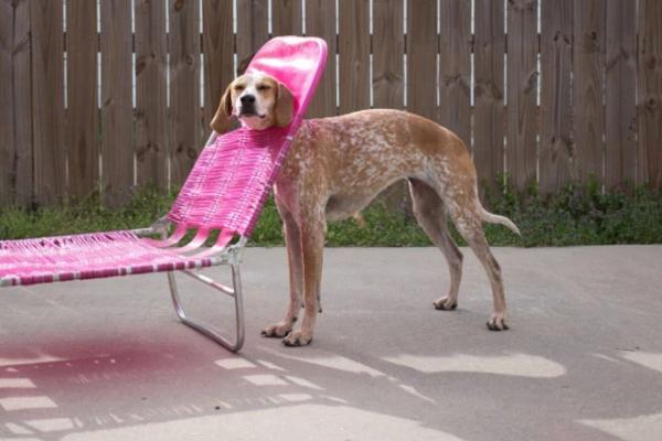 Cười té ghế với màn mắc kẹt khó đỡ của thú cưng trong nhà
