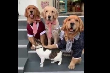 """Video: Đáng yêu gia đình chó chụp ảnh phải có mèo thì mới """"vừa lòng"""""""