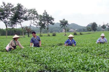 Phú Thọ đưa ra nhiều giải pháp hỗ trợ tăng thu nhập cho hộ nghèo