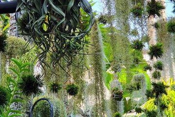 """Ngỡ ngàng khu vườn 300m2 đẹp như """"tiên cảnh"""" giữa TP Cần Thơ"""