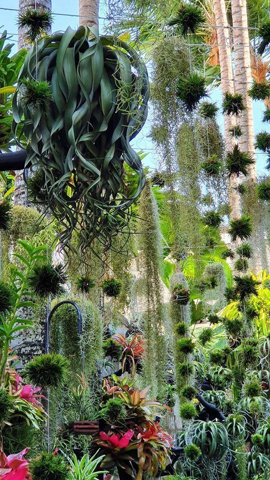 Ngỡ ngàng khu vườn 300m2 đẹp như 'tiên cảnh' giữa TP Cần Thơ
