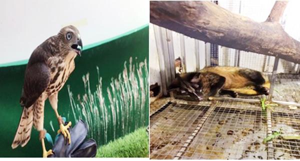 Đà Nẵng: Xử phạt đối tượng chuyên dùng 'lưới tàng hình' săn bắt chim hoang dã