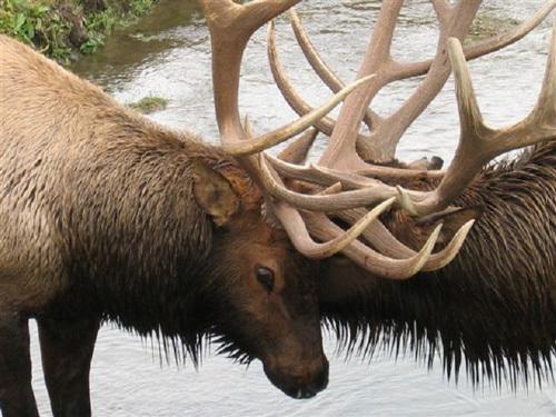 Ý nghĩa truyện ngụ ngôn ngắn Con nai và bác thợ săn