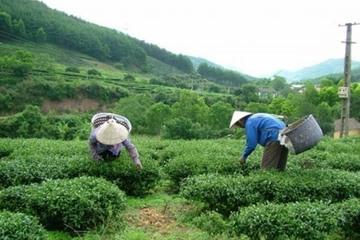 Lạng Sơn: Hàng loạt hộ nghèo được vay vốn ưu đãi, hỗ trợ nhà ở