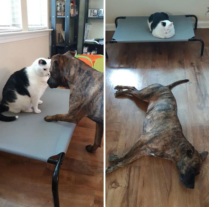 Bộ ảnh chứng minh mèo luôn xứng đáng là 'boss'