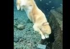 """Khâm phục khả năng """"lặn vớt kho báu"""" của chú chó"""