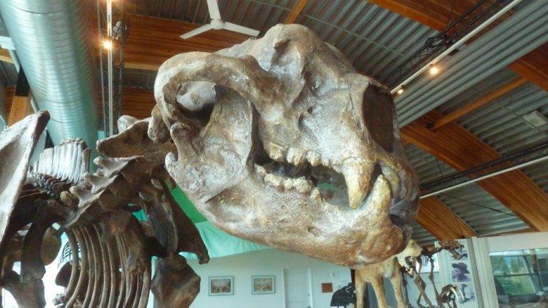 Điểm mặt những sinh vật khổng lồ đe dọa sự sống con người trên Trái Đất