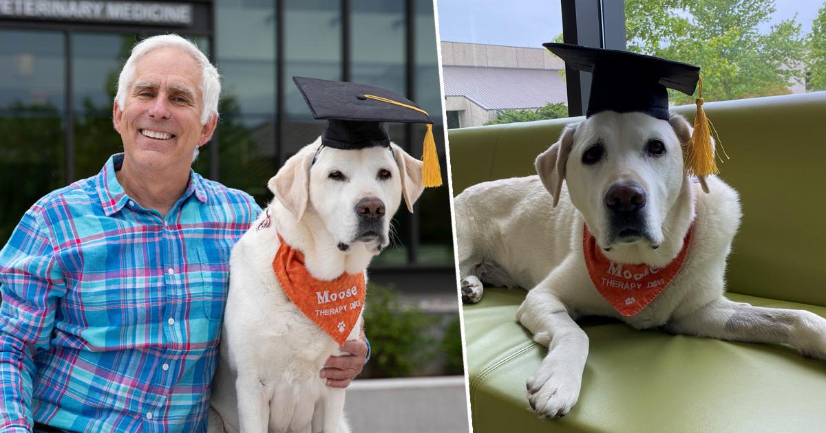 Chú chó thông minh nhận bằng tiến sĩ đại học Mỹ