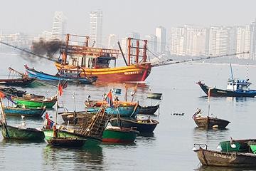 Đà Nẵng: Tàu cá ngoại tỉnh khai thác tận diệt, gây ô nhiễm vùng biển Sơn Trà