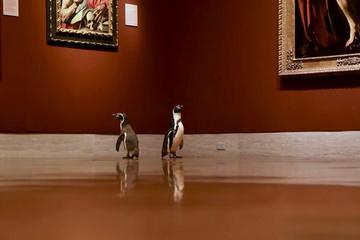Bảo tàng ở Mỹ mở cửa cho chim cánh cụt thưởng thức nghệ thuật đỉnh cao