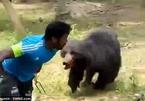Kinh hãi gấu lao vào tấn công người, chạy đuổi theo ô tô trên đường phố Nga