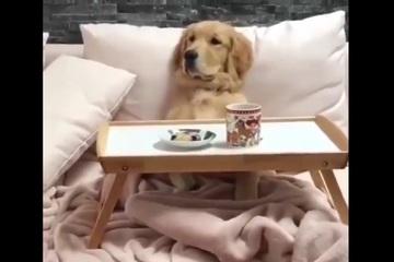 """Video: Tận hưởng bữa sáng trên giường phong cách """"boss"""""""