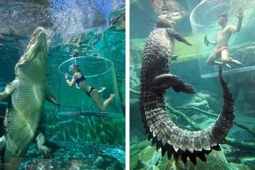 Trải nghiệm cảm giác đứng tim khi bơi cùng cá sấu ăn thịt người