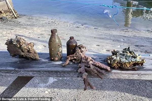 Cá heo thông minh tặng 'báu vật đại dương' cho du khách