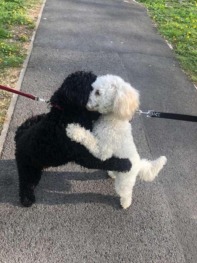 Hình ảnh hai chú chó ôm lấy nhau mừng rỡ hạnh phúc trong ngày gặp lại gây bão mạng