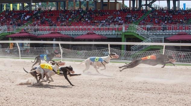 Đang xem xét cấp phép kinh doanh đặt cược đua chó tại Bà Rịa Vũng Tàu