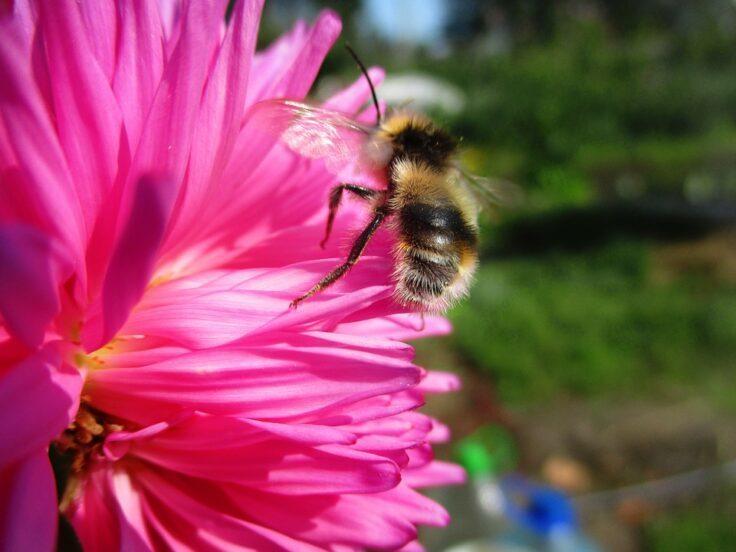 Chỉ bằng hành động nhỏ, loài ong khiến giới khoa học ngỡ ngàng vì IQ cao