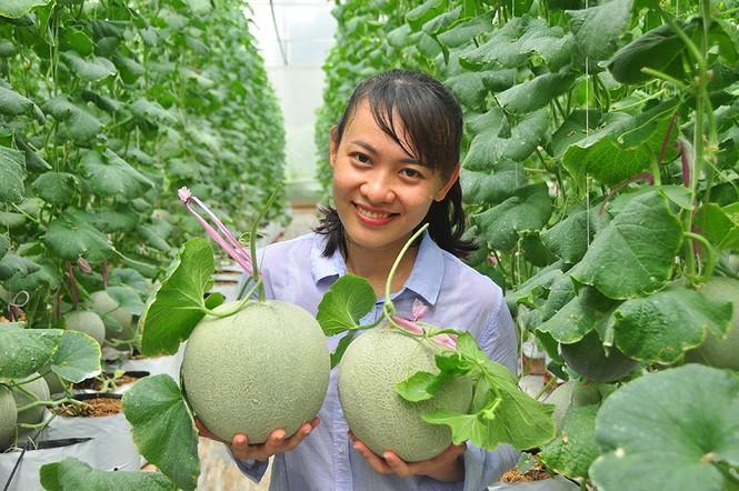 Mê mẩn vườn dưa lưới của nữ thạc sĩ 8X ở Vĩnh Long