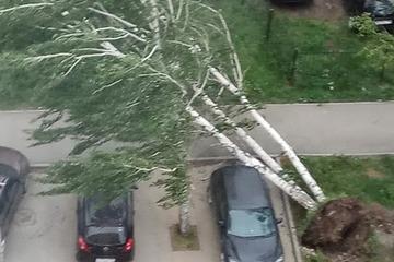 Nga: Kinh hoàng siêu bão hất tung người, quật ngã cây cối, phá hủy nhiều ô tô