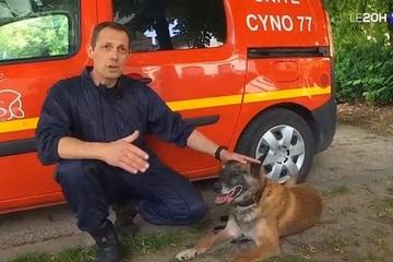 Pháp thử nghiệm huấn luyện chó tìm kiếm Covid-19 nhờ mồ hôi người