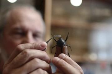 Kinh ngạc trước những chiếc khẩu trang tí hon dành cho côn trùng