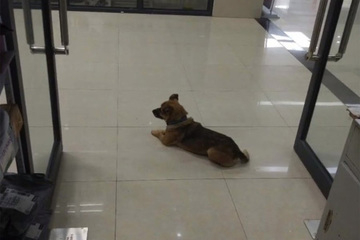 Cảm động chú chó đợi chủ suốt 3 tháng vì không biết chủ đã chết do Covid-19