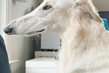 Kinh ngạc chú chó trở thành ngôi sao trên MXH nhờ có mũi dài hơn 30cm