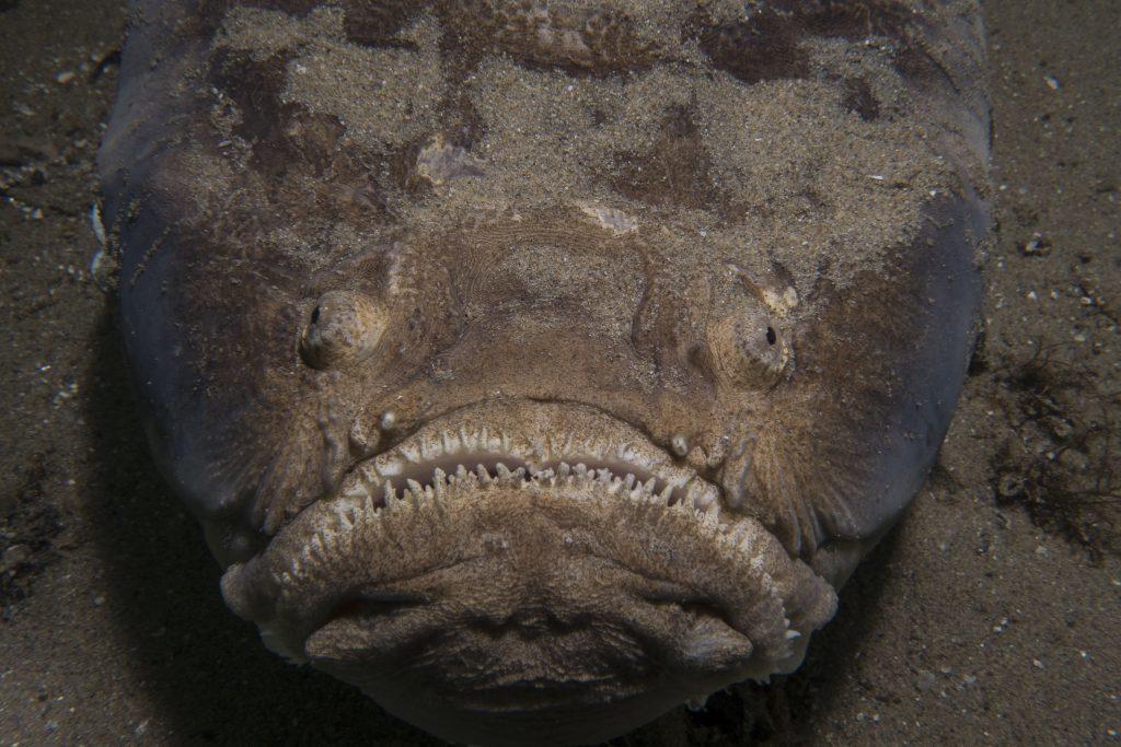 Thợ lặn hốt hoảng đối mặt với cá mặt quỷ dưới đáy đại dương