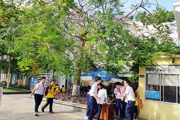 """Từ vụ cây đổ đè chết học sinh thấy """"lỗ hổng"""" quản lý cây xanh trường học ở Đà Nẵng"""