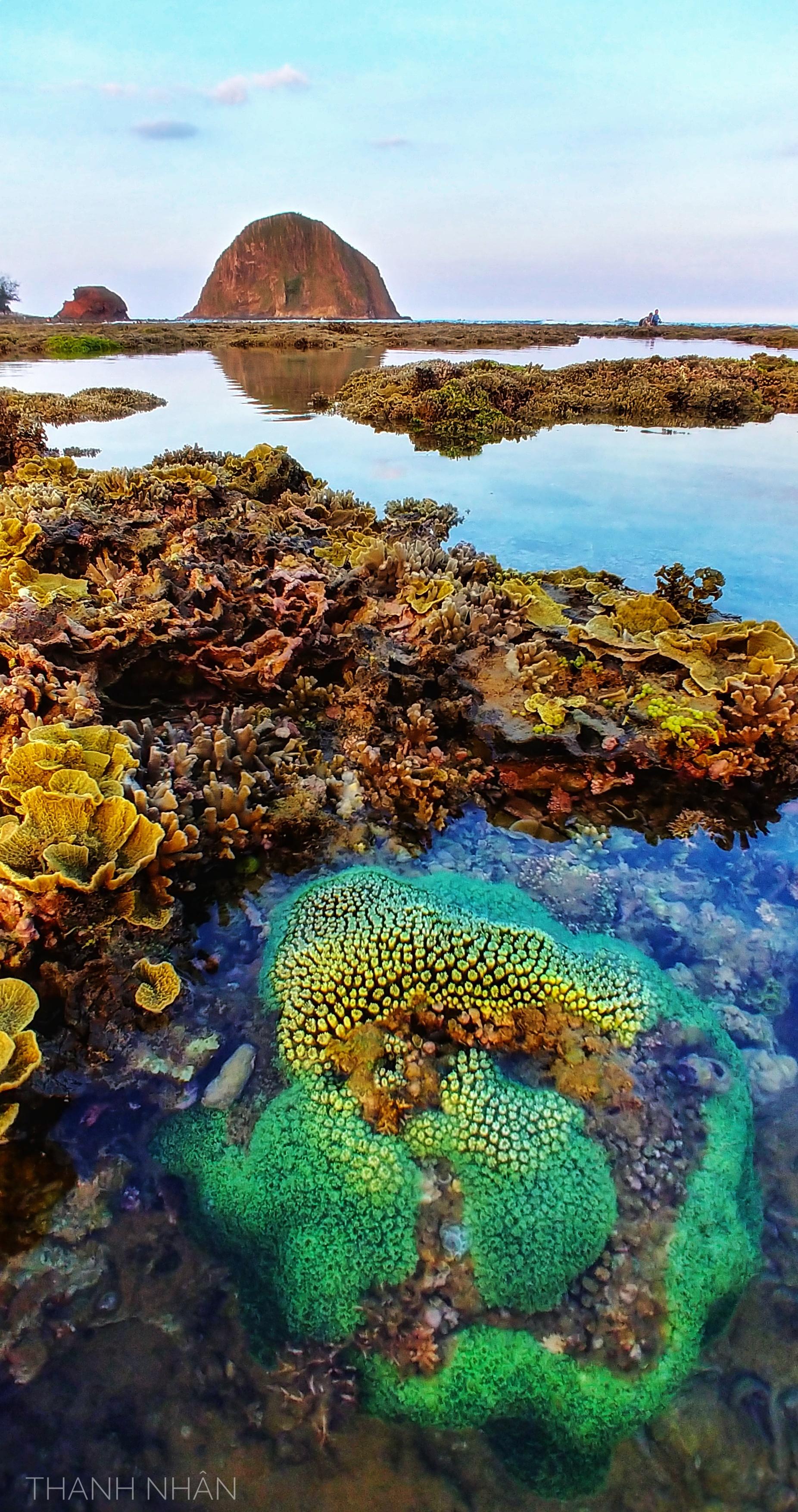 Tới Phú Yên ngắm rạn san hô trên cạn rực rỡ sắc màu