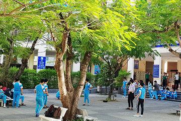 Đà Nẵng: Khẩn trương kiểm tra, xử lý cây phượng vĩ mất an toàn trong trường học