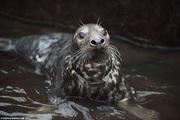 Video: Giải cứu những chú hải cẩu bị mặc kẹt rác thải nhựa