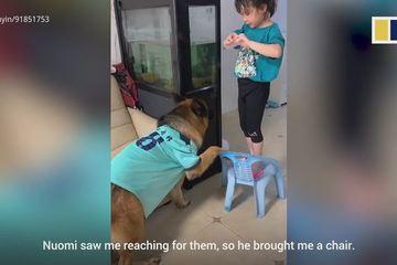 Màn hợp tác trộm đồ 'siêu dễ thương' giữa cô chủ nhỏ và chú chó